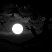 Midnight Nocturne Album Cover